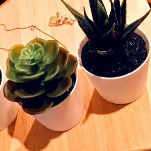 Pack of three succulent artificial